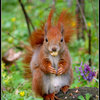 Squirrel_and_nut_by_Shira9.jpg
