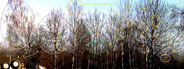after crash 1zoom R trees marked.jpg